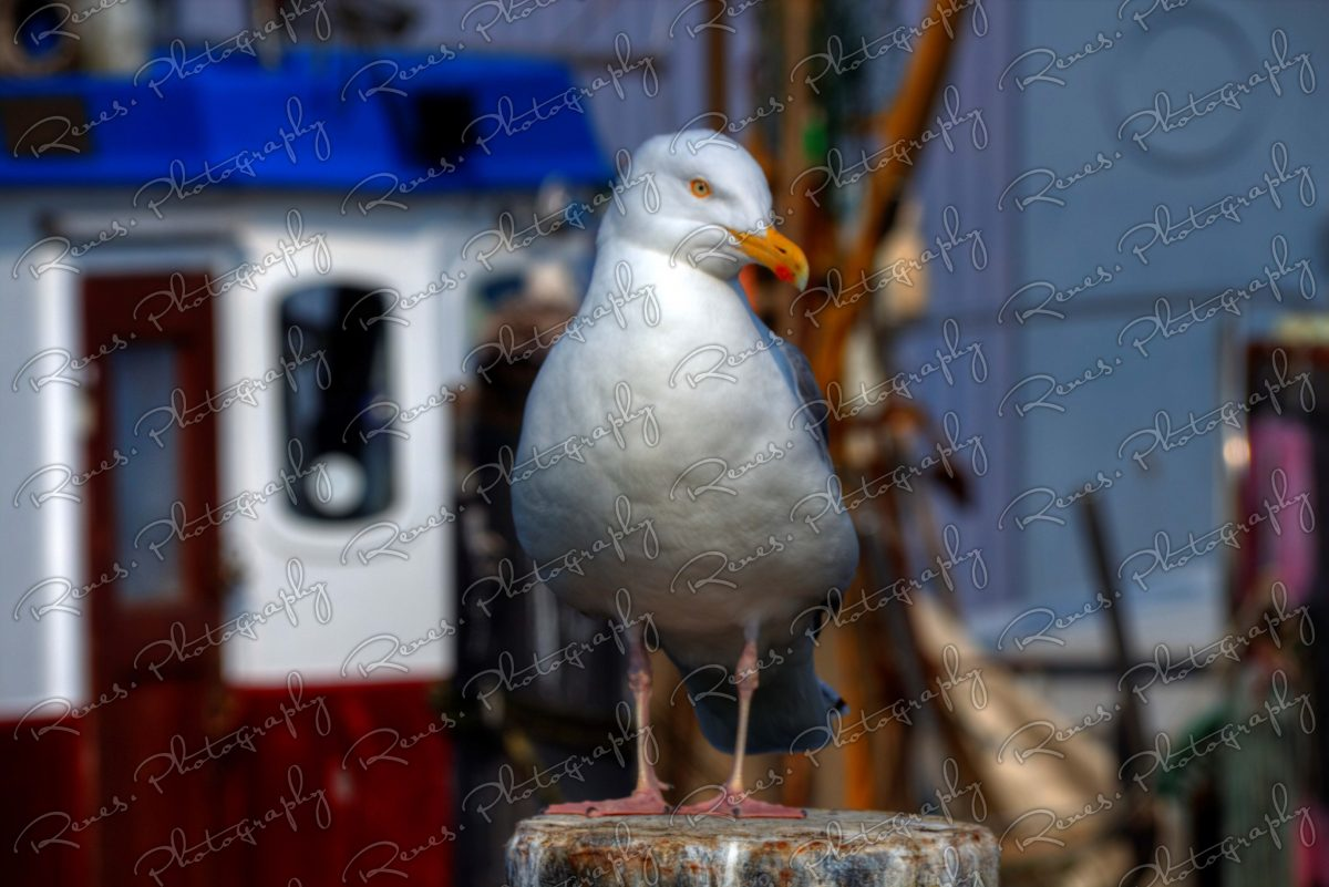 Seagull in Niendorf 1 scaled