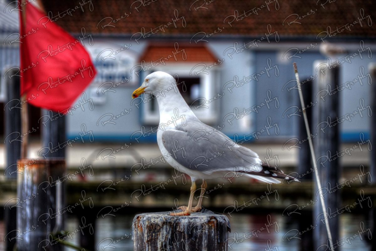 Seagull in Niendorf 3 scaled